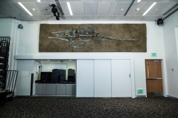 Finished whale fossil