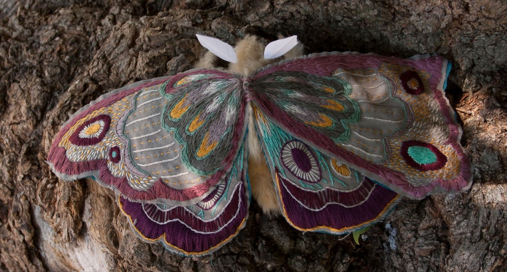 giant-embroidered-moth-1