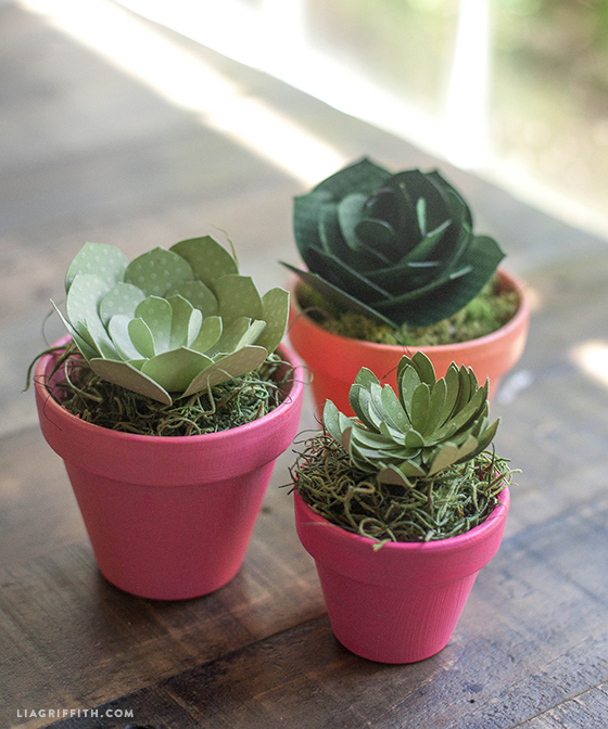 Mini_Pots_Succulent_DIY