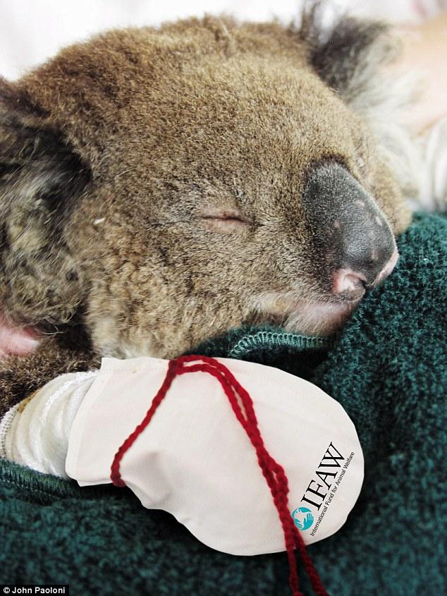 koala-mittens-1