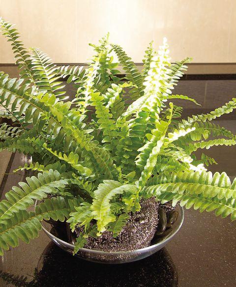 善用盆栽淨化室內空氣,植物是最天然の空氣清淨機!