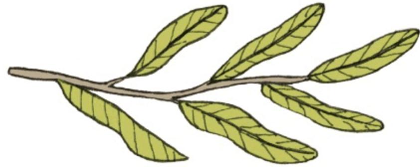 生活好憂慮?從9種樹木學習找到人生的意義與價值 – 媽媽經 專屬於媽媽的網站