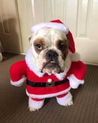 The $7 Christmas dog costume that's too cute not to buy.