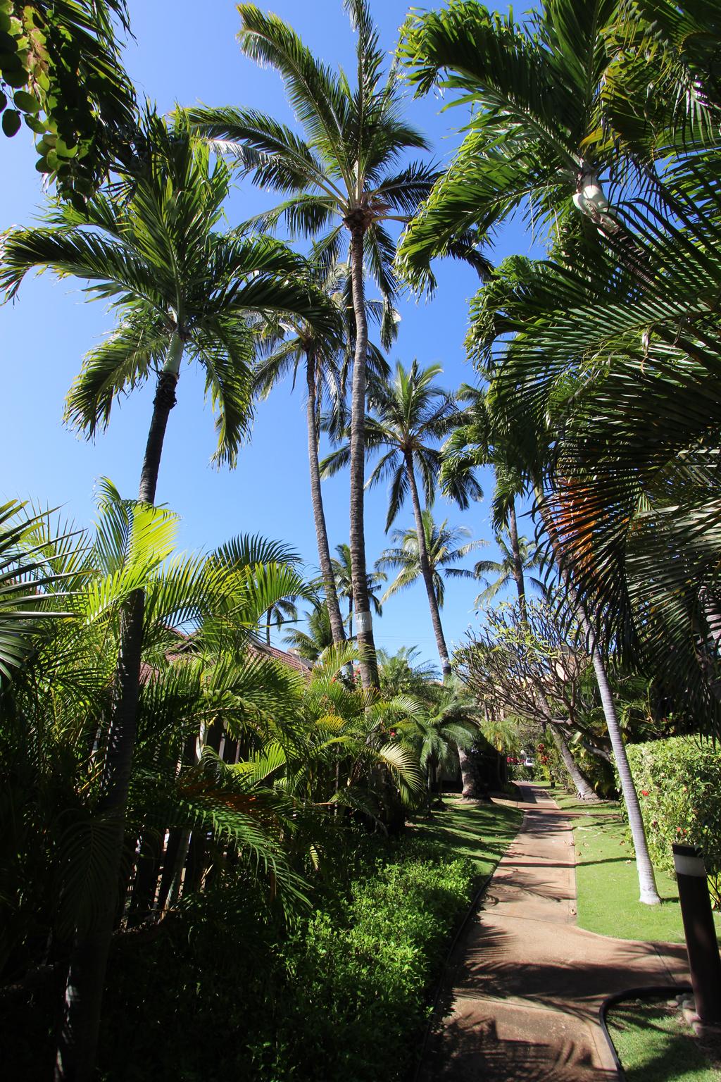 Kihei Resort 209  Maui Guidebook