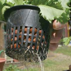 From To Seed Plant Diagram Att Uverse Wiring Take It Outside: Why Outdoor Hydroponic Systems Make Sense