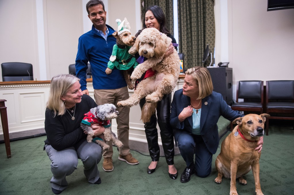 From left, Reps. Susan Wild, D-Pa., Mini Poodle, Zoey, Carlos Curbelo, R-Fla., and Welsh Terrier, Riggins, Stephanie Murphy, D-Fla., and Mini Goldendoodle, Carmela, and Ileana Ros-Lehtinen, R-Fla., and D.C. pound dog, Maya, pose for a picture at the Bipawtisan Howliday in Rayburn Building on December 10, 2018. Riggins is owned by Curbelo's communications director Joanna Rodriguez. (Photo By Tom Williams/CQ Roll Call)