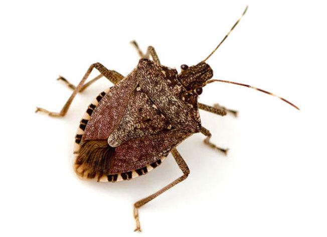 臭蟲找庇護 入侵南卡民宅 - 世界新聞網