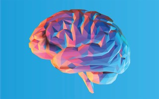 Risultato immagini per brain