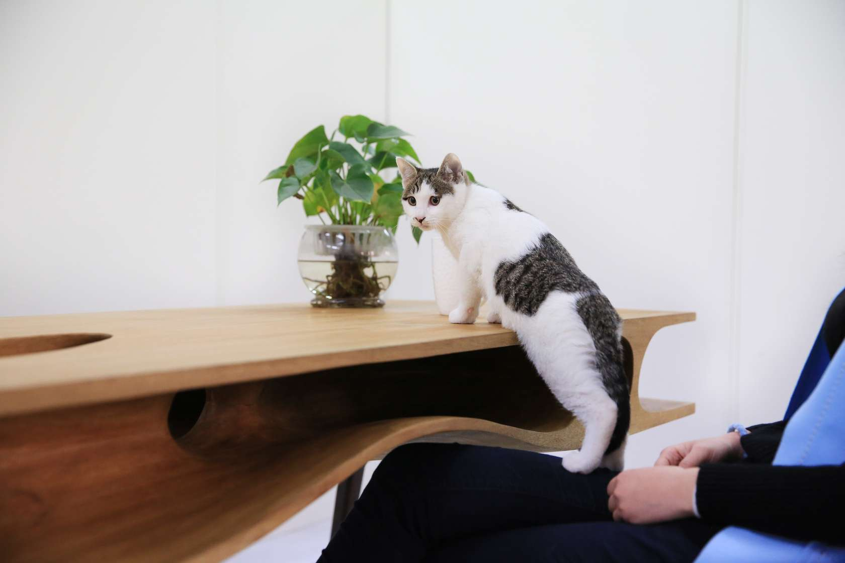 Cat Table for Architect Cat Lovers