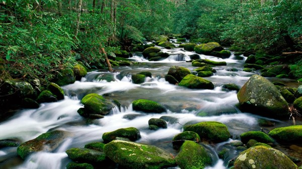 Landscapes Nature Tennessee Rivers Great Smoky Mountains Fork 1920x1080 Wallpaper High Quality
