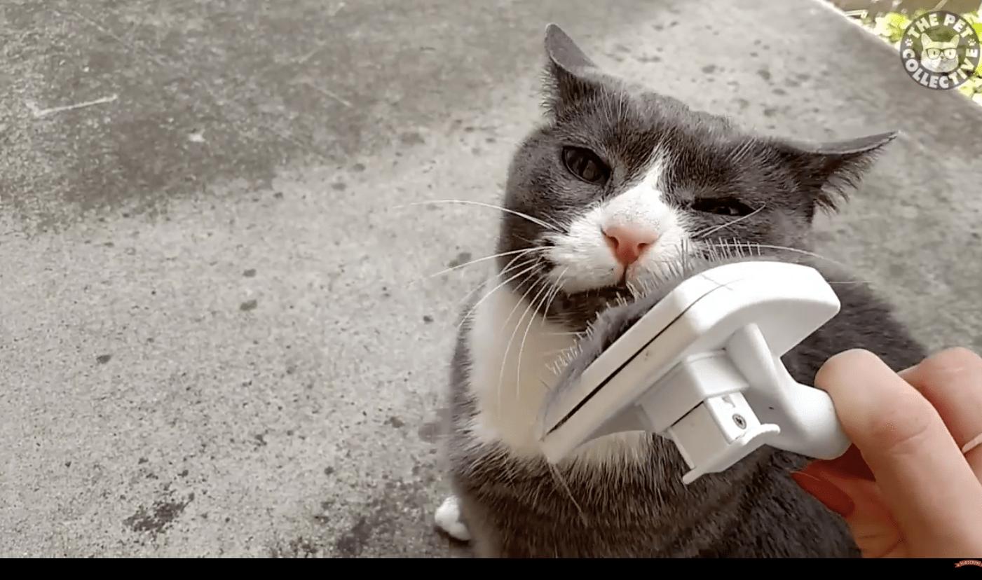 Happy Cats Compilation  Cat Fancast