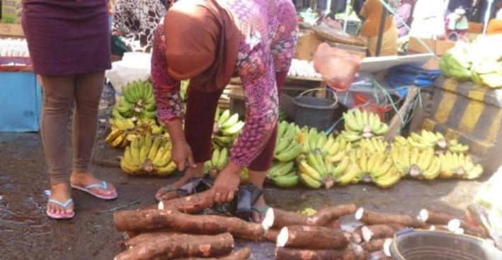 Asante-Akim Central To Build Cassava Processing Factory