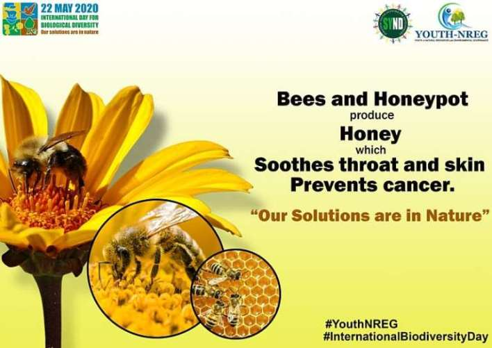 , World Biodiversity Day: SDG 15 CSOs Warn Against Encroachment On Forest Reserves