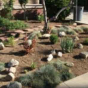 drought tolerant landscaping ideas