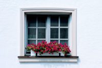 8 Tips to Make Your Window Box Flourish and 11 Ideas to ...