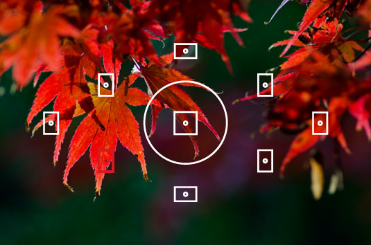 Focus points on the leaves
