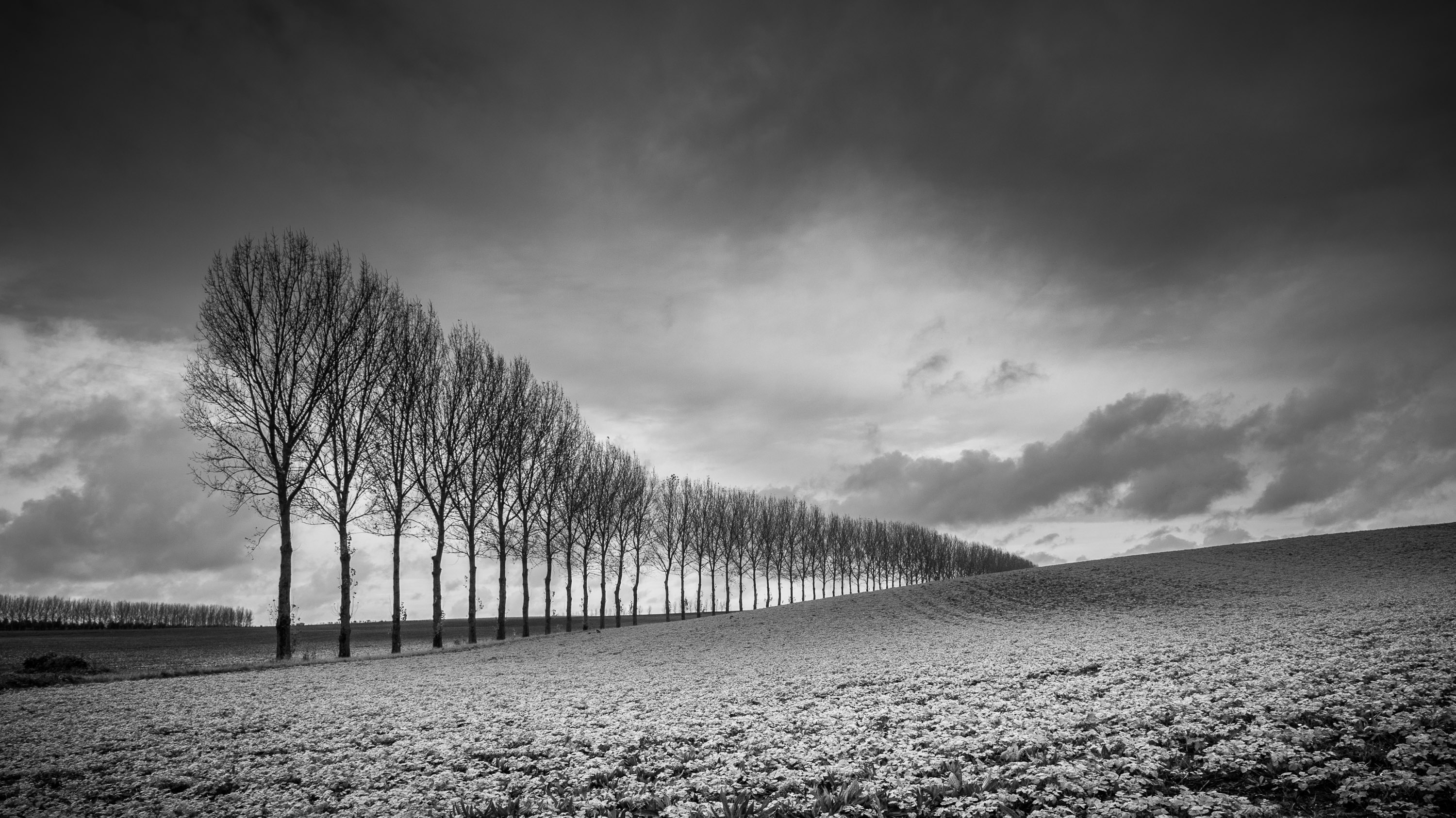 How To Master Black And White Photography
