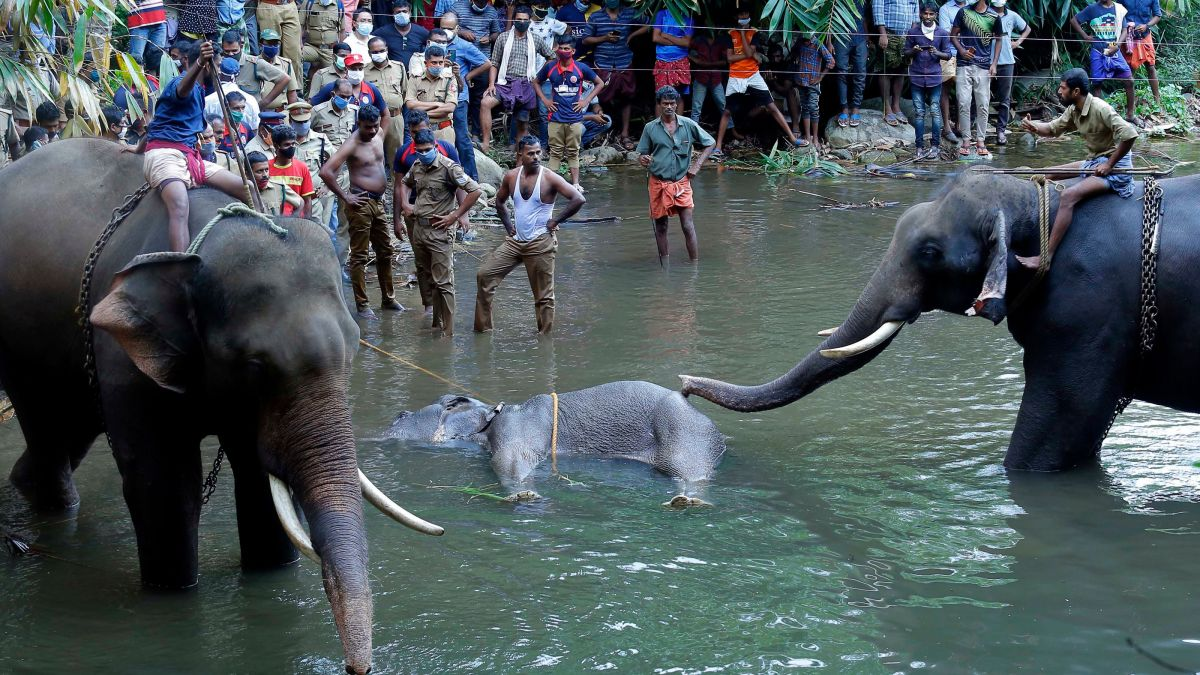 Elephant in India dies after probably consuming fruit