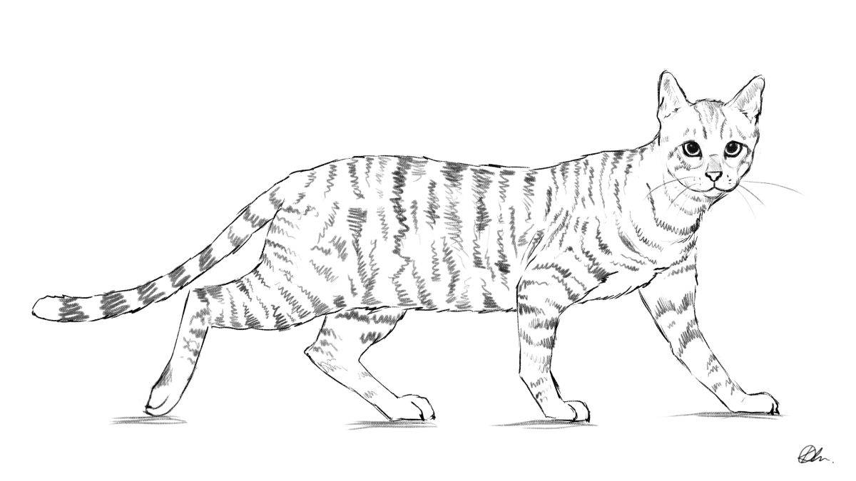 How to draw: 100 tutorials for drawing animals, people