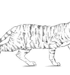dog and cat eye diagram [ 2884 x 1622 Pixel ]