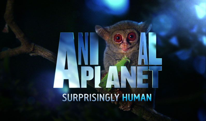 New logo and branding for Animal Planet  Creative Bloq