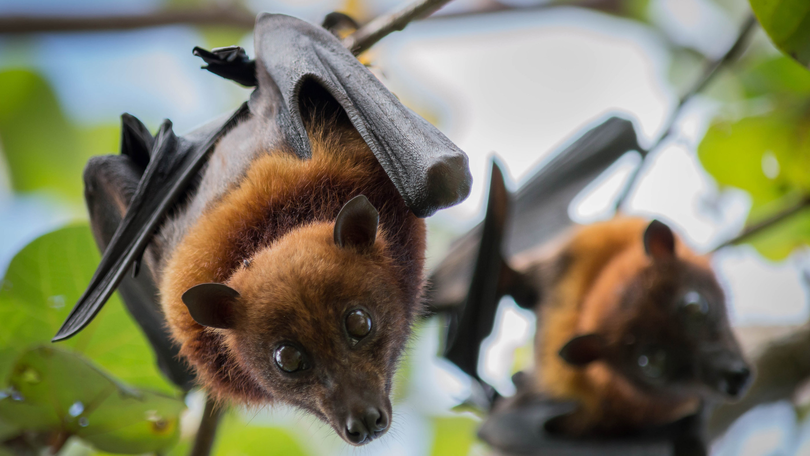 11 (sometimes) deadly diseases that hopped across species | Live ...