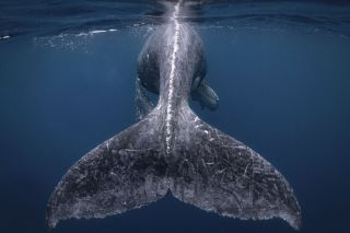 Grand Prize winner: Reiko Takahashi / National Geographic Travel Photographer of the Year Contest