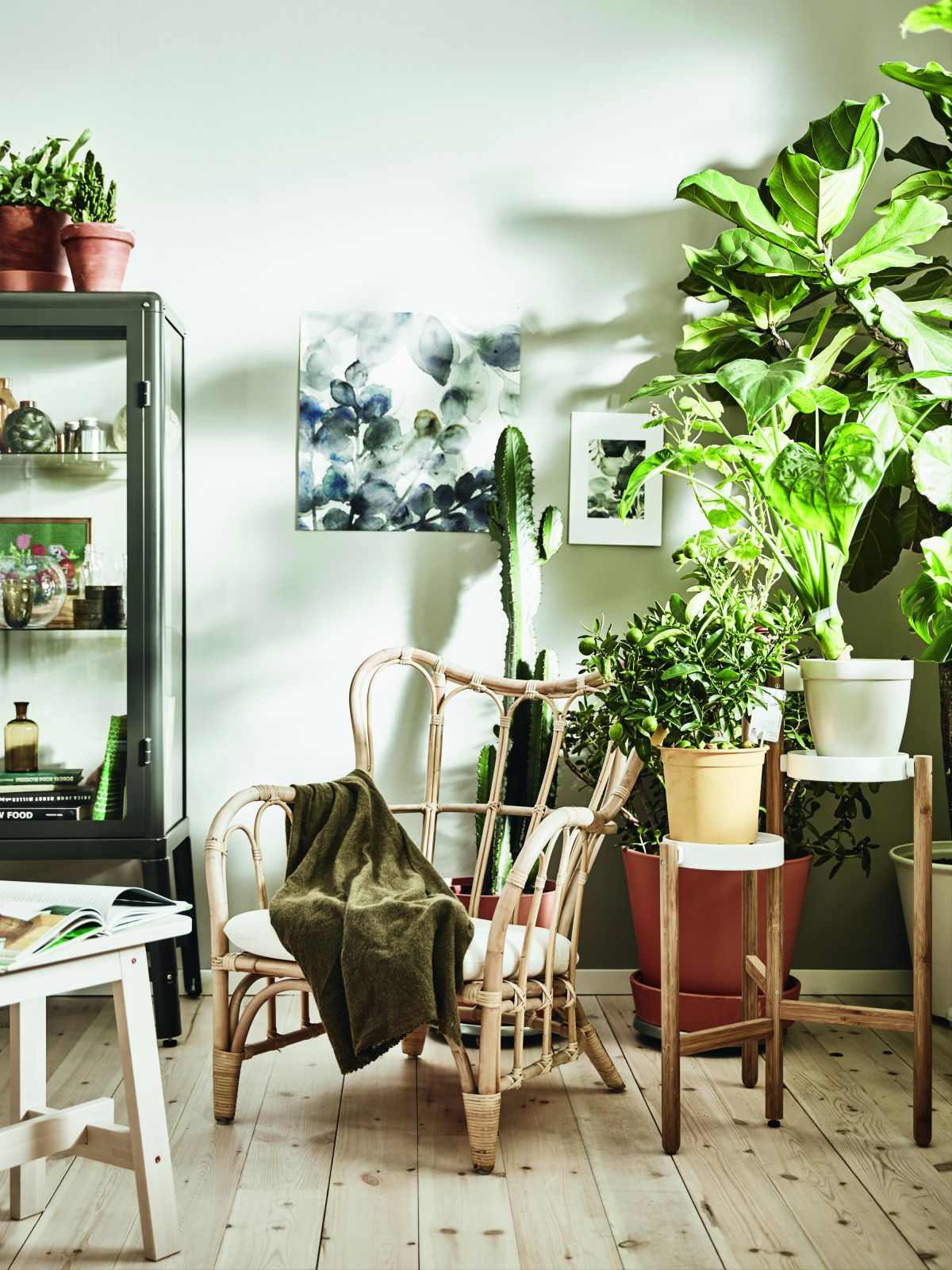 House plants 19 gorgeous display ideas to brighten up