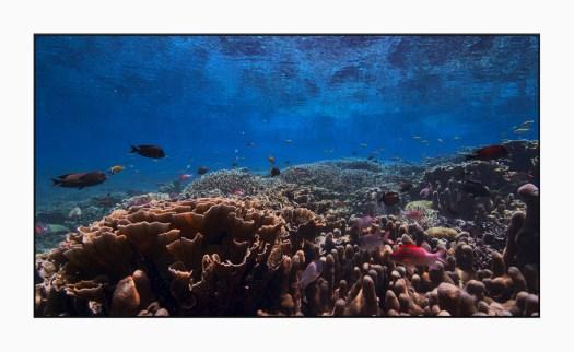 Apple TV's stunning new undersea screensavers