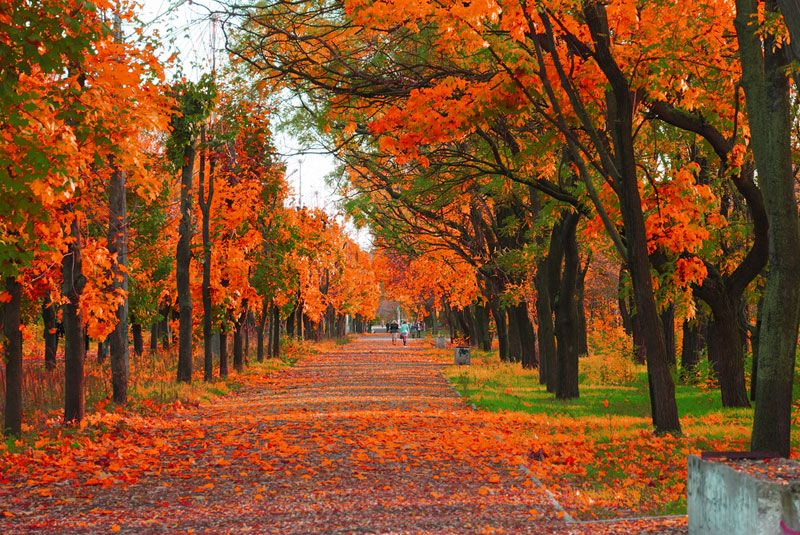 Falling Leaves Hd Live Wallpaper Autumn The Cooling Off Season Live Science