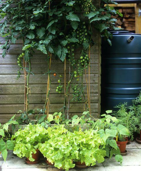small vegetable garden ideas layout