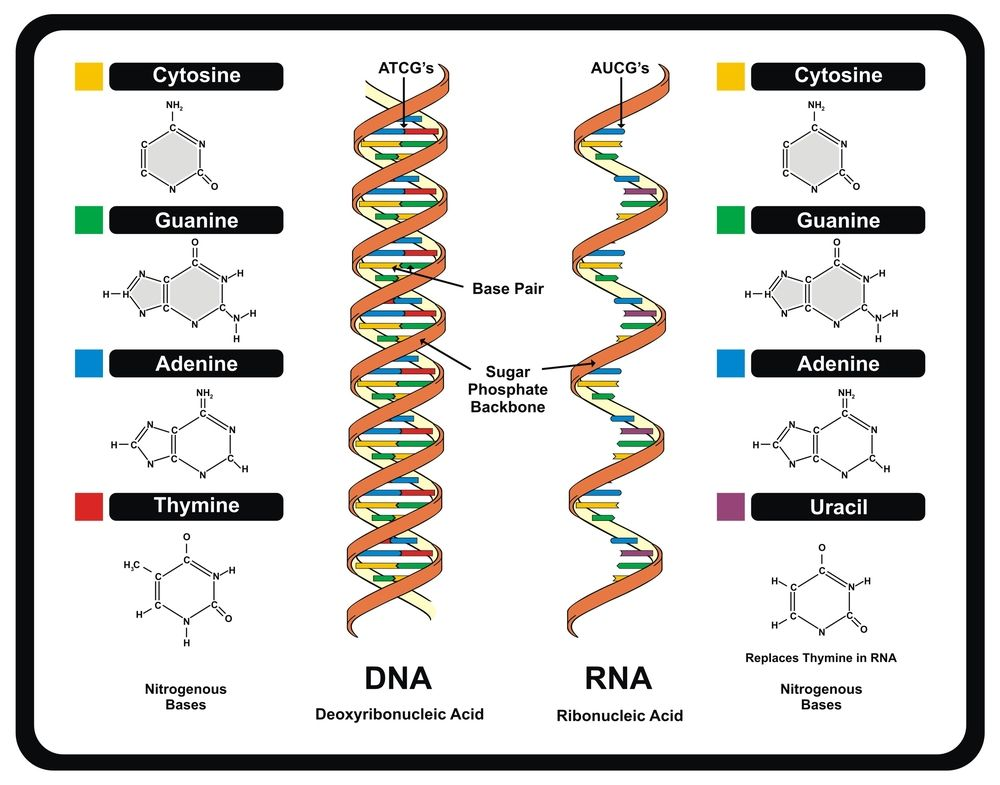 dna definition structure discovery