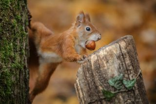 how do squirrels remember