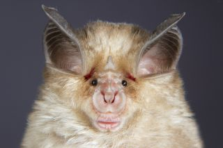 New coronavirus may have started in bats. But how did it hop to ...