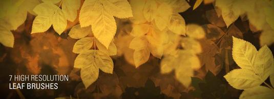 free Photoshop brushes: leaf