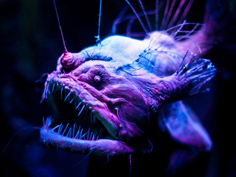 In Photos Spooky Deep Sea Creatures Live Science