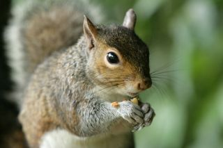squirrels diet habits other