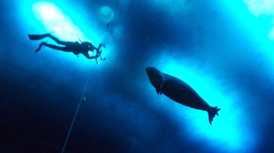 Underwater seals produce the sounds of 'Star Wars' and we have no idea why