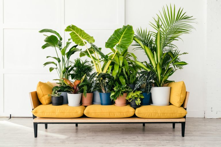 Best Indoor Plants 18 Gorgeous Indoor Plants For Every Room Real Homes