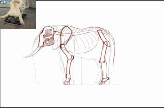 Sketch of elephant skeleton