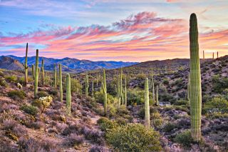 Arizona: Latest updates on coronavirus | Live Science