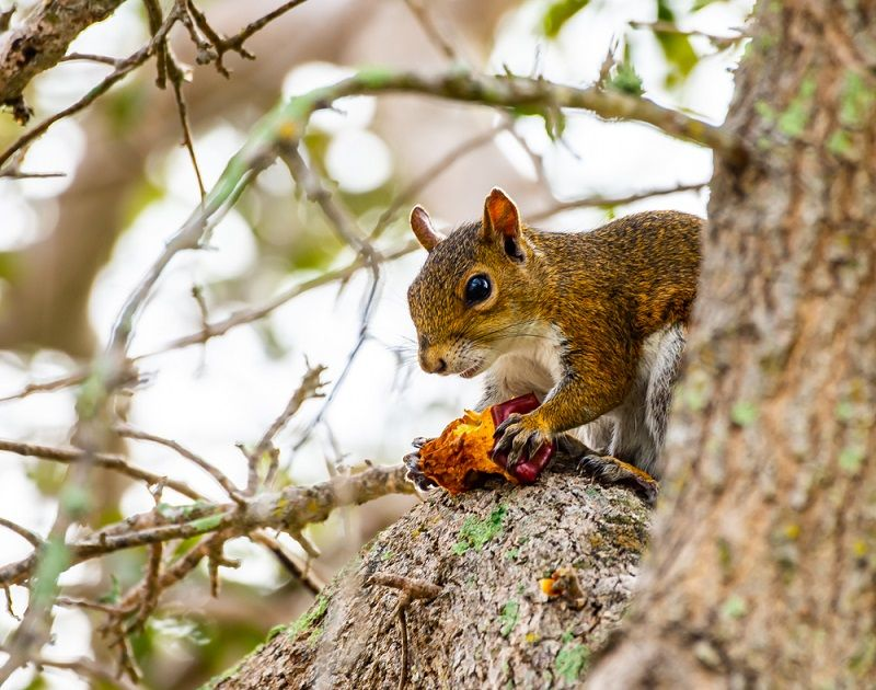 Man Dies from Extremely Rare Disease After Eating Squirrel ...
