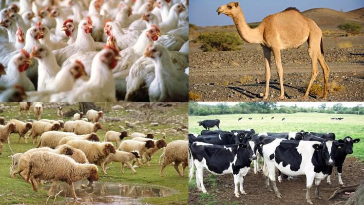 اهمية الزراعة واثرها في تربية الحيوان