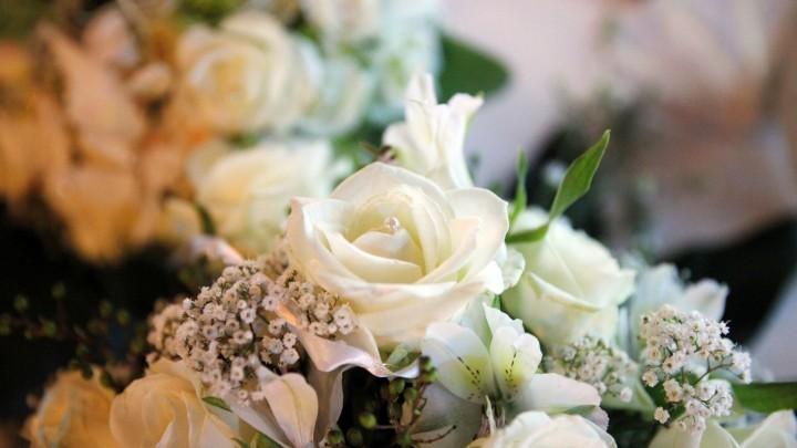 Blumen mit Katzenstreu trocknen  Frag Mutti