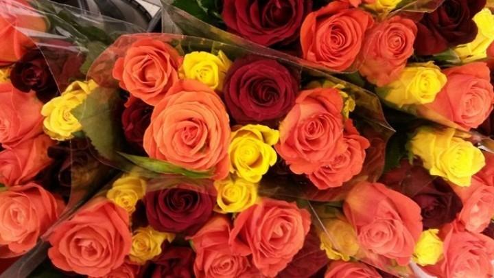 Schnittblumen Frisch Halten schnittblumen frisch halten 4 tipps tricks schnittblumen l nger