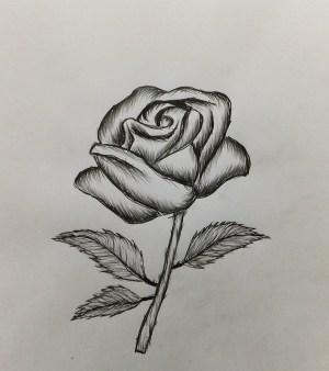 rose easy draw drawing drawings simple beginners pencil roses flowers flower drawn clipartfox steemit way