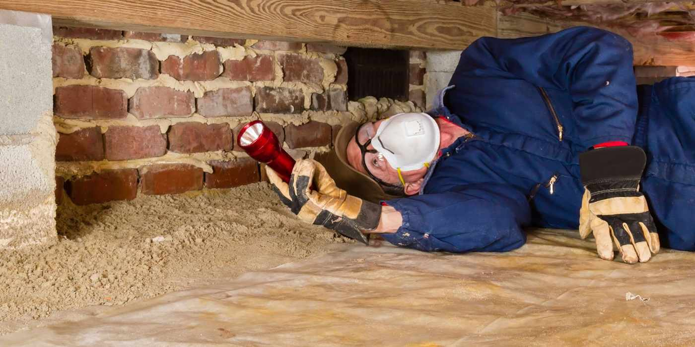 Termite Inspection Cost vs. the Savings It Brings: Are Annual ...