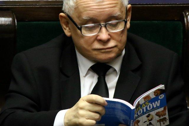 Znalezione obrazy dla zapytania kaczyński album koty