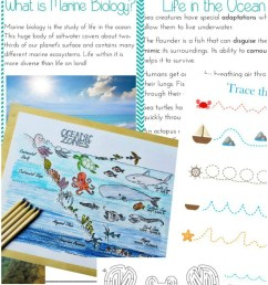 The Best Ocean Unit Study For Kids - Ocean Lesson Plans and Ocean Zones for  Kids - Natural Beach Living [ 1422 x 792 Pixel ]