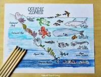 The Best Ocean Unit Study for Kids - Ocean Lesson Plans ...
